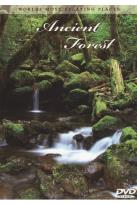 World's Most Relaxing Places: Ancient Forest