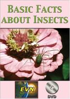 Basic Facts About Insects