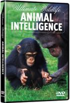 Ultimate Wildlife: Animal Intelligence