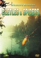 Wildlife Stories: The Whole Story - Beetles & Spiders