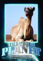 Third Planet: The Camels of Pushkar