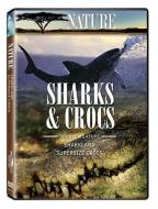 Nature - Sharks & Crocs