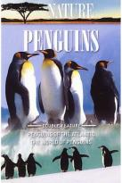 Nature - Penguins