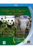 Pandas and Pygmies: True Survivors