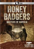 Nature: Honey Badgers - Masters of Mayhem