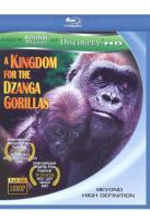 Kingdom for the Dzanga Gorillas