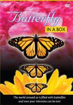 Butterfly in a Box