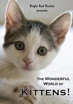 Wonderful World of Kittens