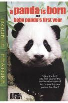 Panda is Born - A Baby Panda's First Year
