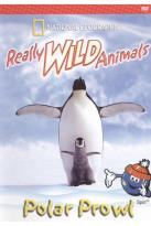 Really Wild Animals: Polar Prowl/Cool Cats