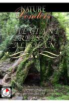 Nature Wonders - Giant Trees Of Alishan