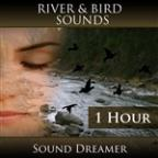 River And Bird Sounds - 1 Hour