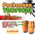 Pachangon Tropical Grupero