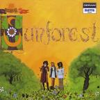 Sound Of Sunforest