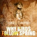Why Birds Follow Spring