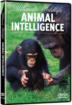 Ultimate Wildlife: Animal Intelligence DVD Cover Art