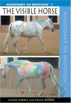 Anatomy In Motion:Visible Horse DVD Cover Art