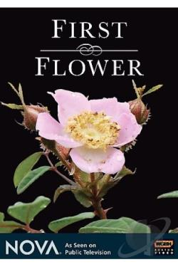 First Flower DVD Cover Art