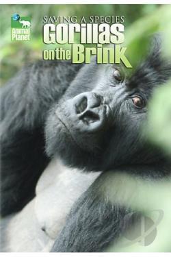 saving gorillas Lca saving mountain gorillas  provided critical support to the ugandan and rwandan wildlife authorities in the protection of the endangered mountain gorillas.