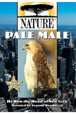 Nature: Pale Male DVD Cover Art
