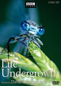 Life in the Undergrowth DVD Cover Art